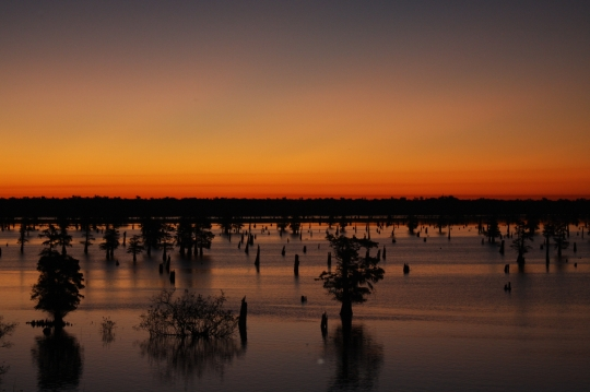 Bayou at dusk